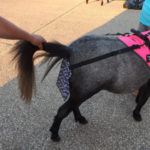 mini horse manure catcher