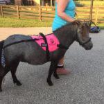 miniauture horse bun bag